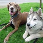 Duke & Pooky 1