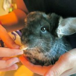 George, along with his friend Franklin, is looking for his forever home.